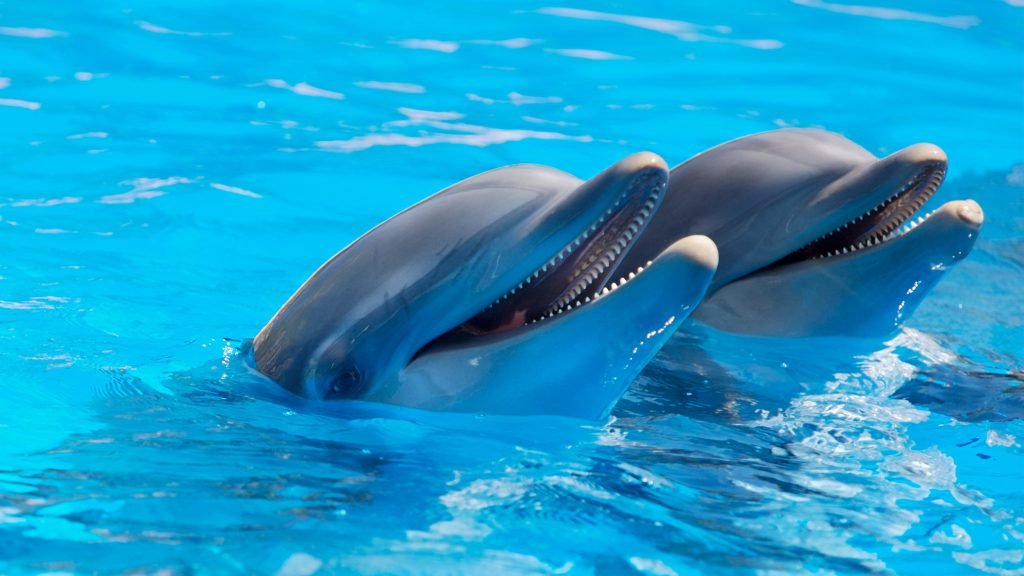 animal-cute-dolphins-225869